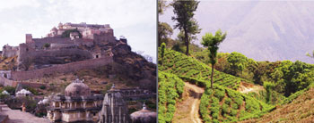 A view of Kumbhalgarh Fort (left) and a Tea Hike in Munnar (right). Photo Credit: Jon Kohn.